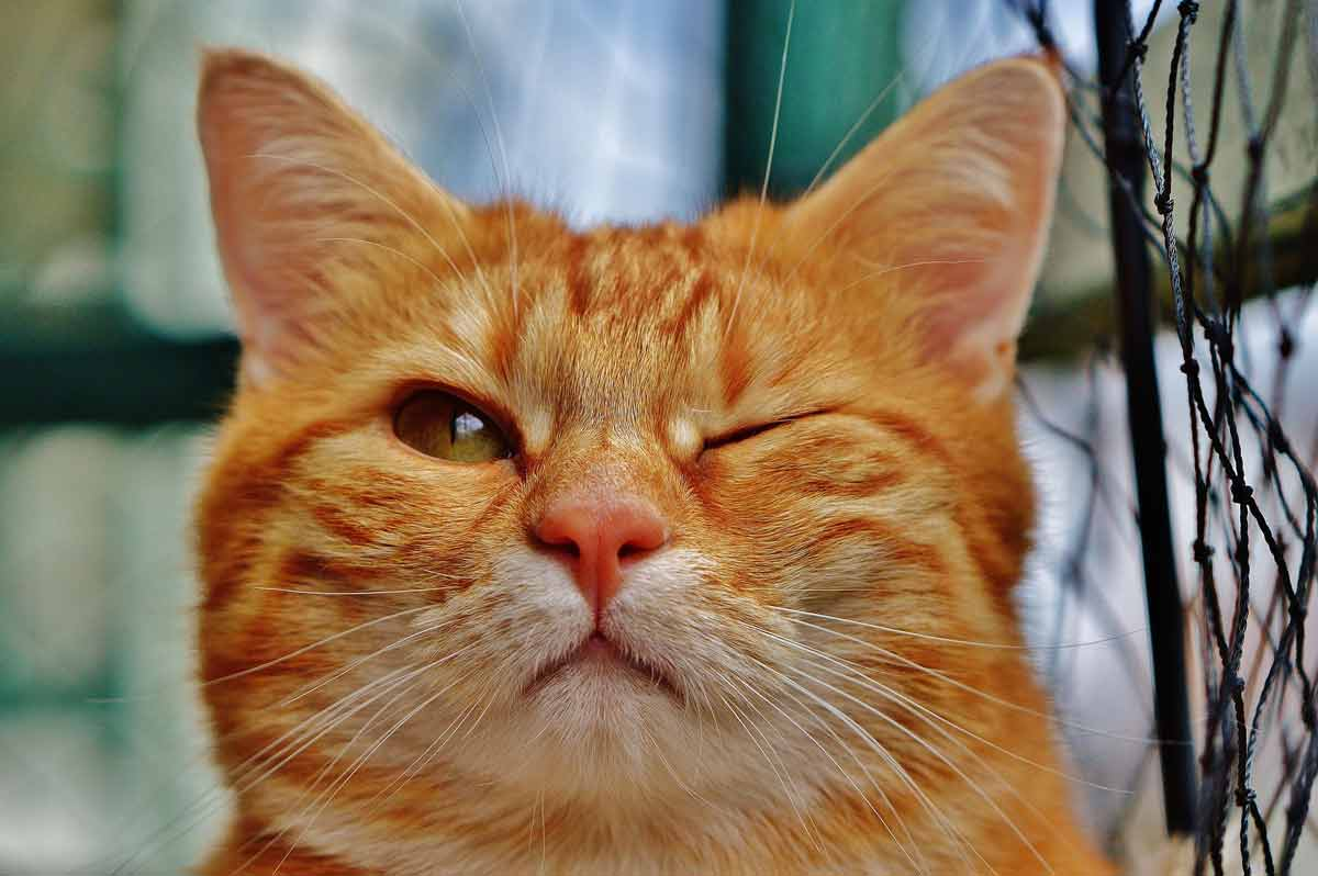 What makes cats so special - Cats have the habit of winking at us
