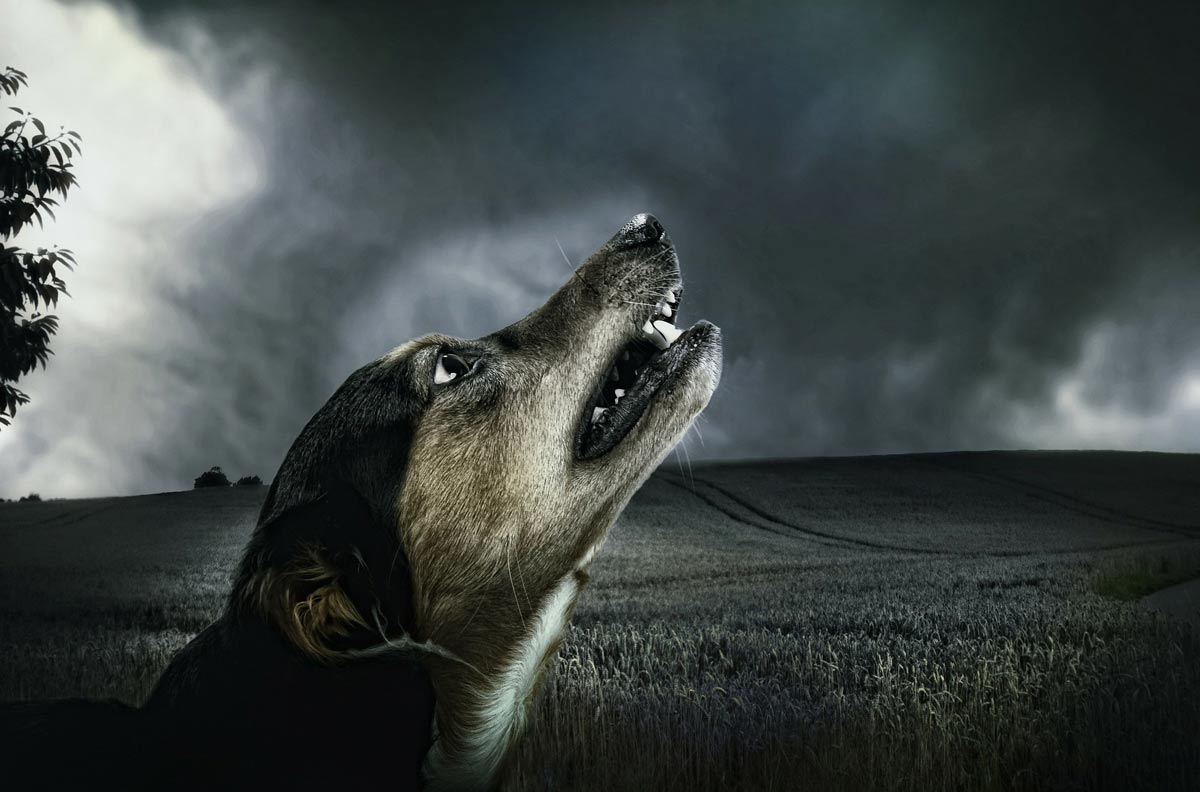 anxiety in dogs - aggression