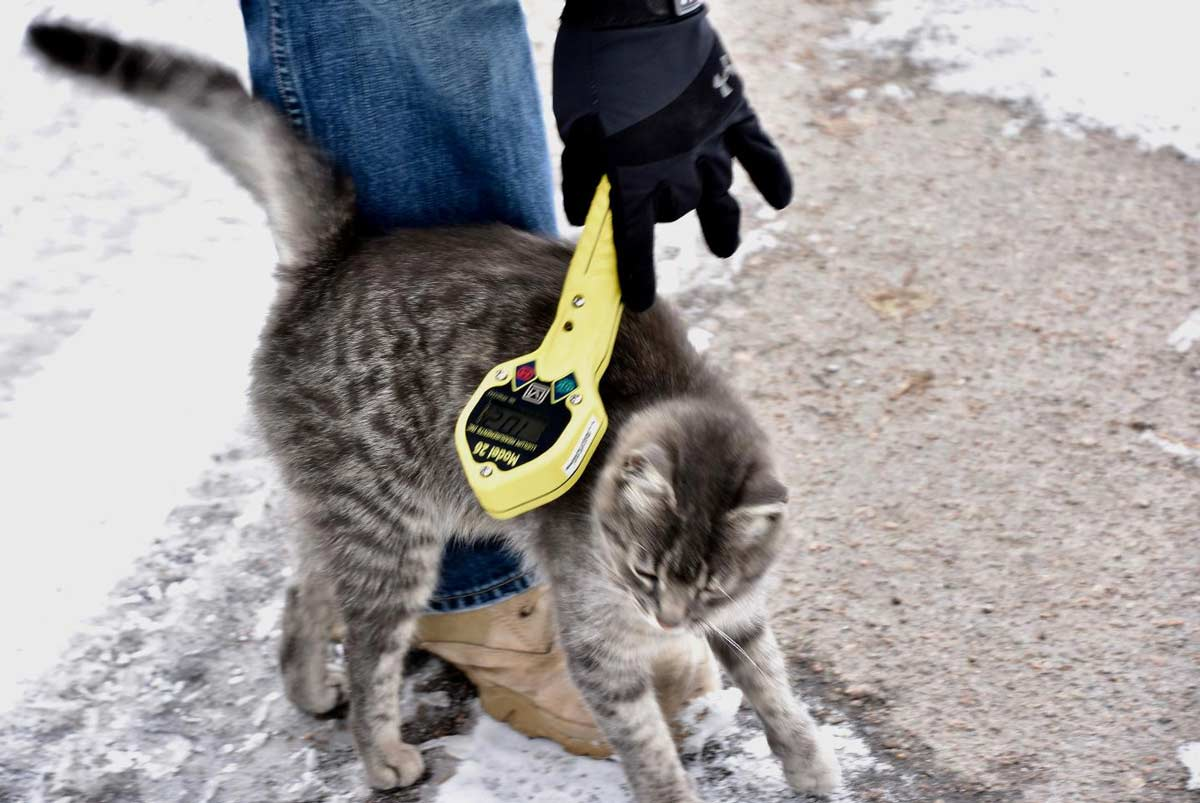 don't pet the puppies of Chernobyl - radioactive cat - geiger-counter
