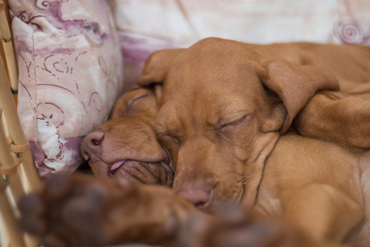 facts about puppies - identical twins