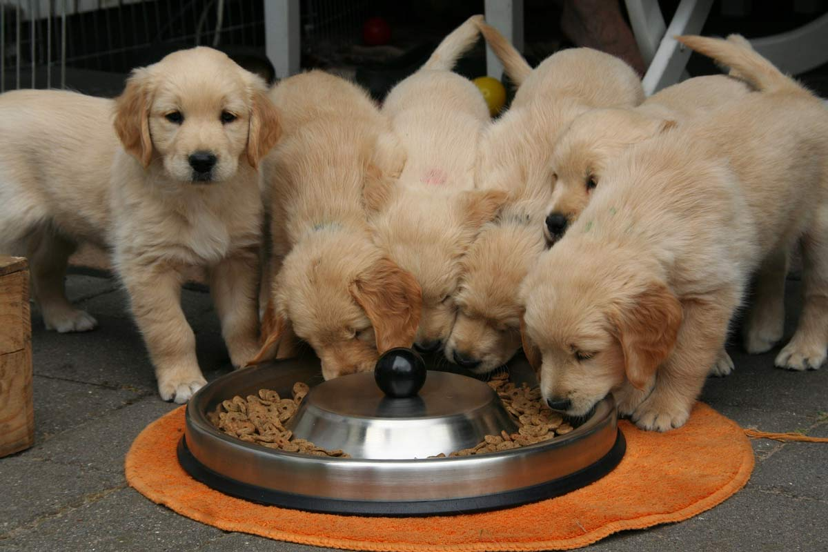 facts about puppies - puppy litter
