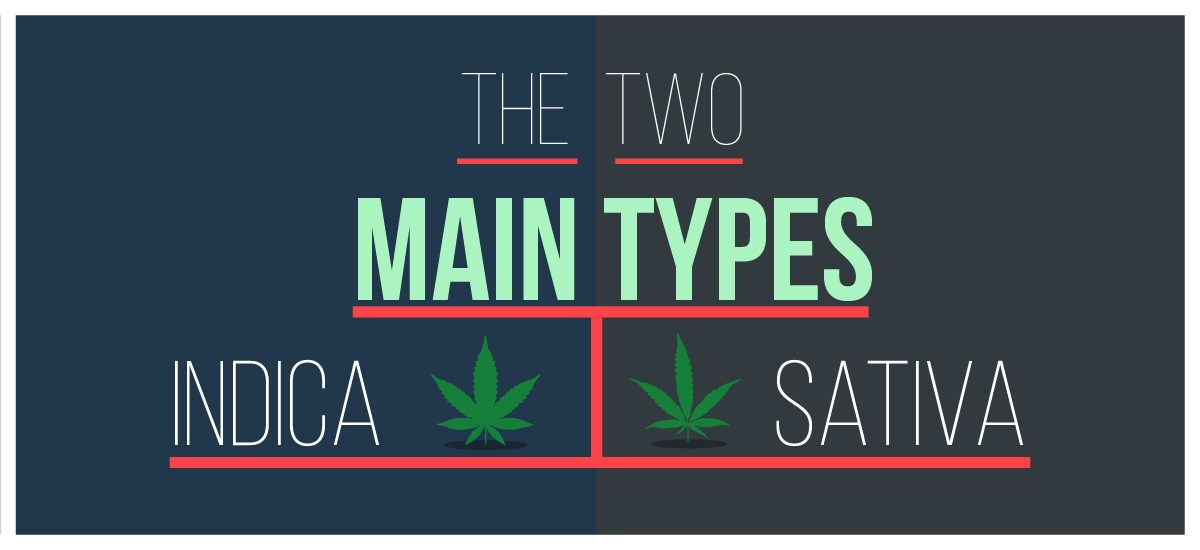sativa and indica-cannabis-marijuana