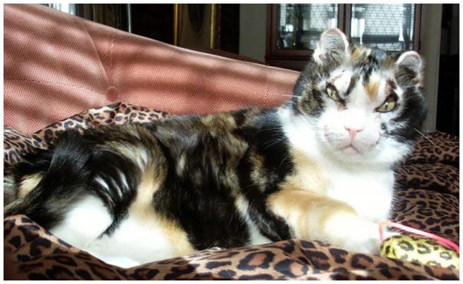 Scarlett the cat hero