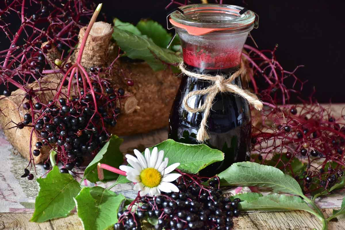 top 5 poisonous foods - Elderberry
