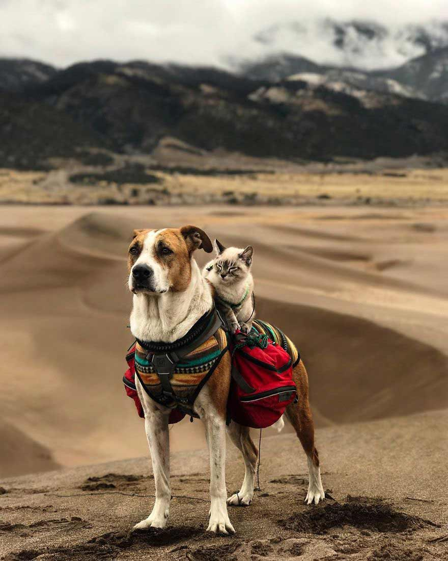 cat and dog travel together
