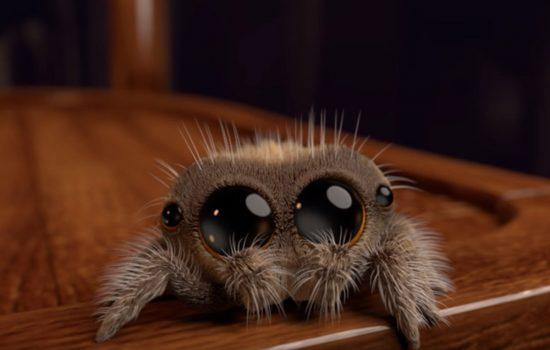 lucas the adorable spider