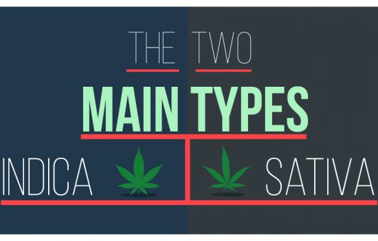 sativa and indica-cannabis-marijuana